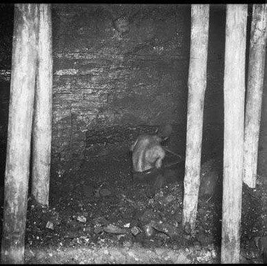 Imagen del trabajo en la mina, anterior a 1910