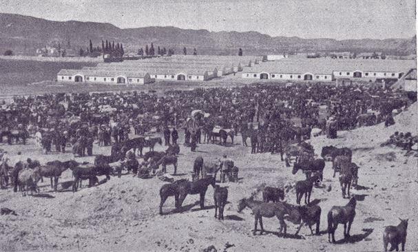 Feria del Ganado (al fondo viviendas de la Obra Sindical del Hogar) y el antiguo cementerio 1955. Fotografía Gómez