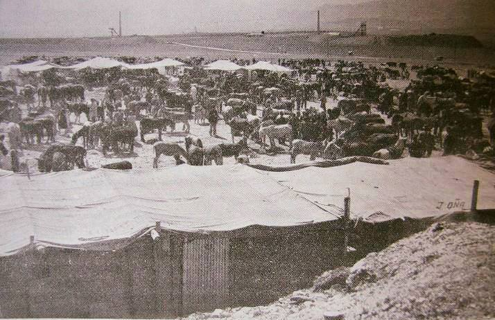 Feria de ganado (La Cuerda) en 1958. Fotografía. Oña