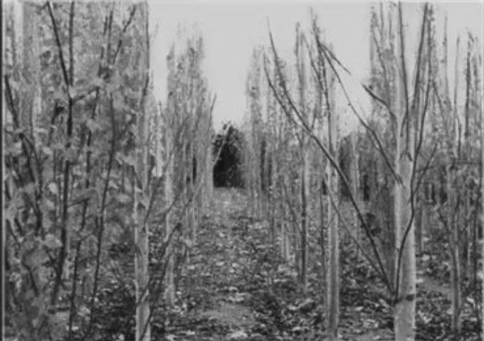 Vistas en las pocitas, 1960